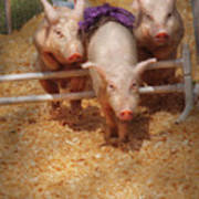 Farm - Pig - Getting Past Hurdles Poster by Mike Savad