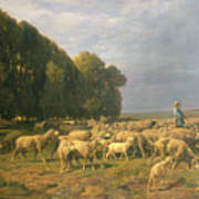 Flock Of Sheep In A Landscape Poster by Charles Emile Jacque