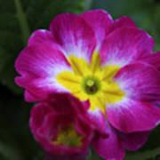 Flower In Spring Poster by Deborah Benoit