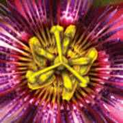 Flower - Intense Passion  Poster by Mike Savad