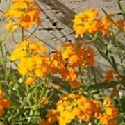 Flowers Orange 2 Poster by Warren Thompson