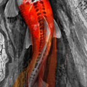 Flowing Koi Poster by Steve Goad