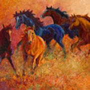 Free Range - Wild Horses Poster by Marion Rose