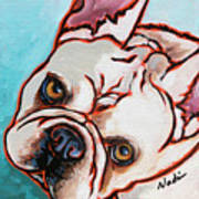 French Bulldog Poster by Nadi Spencer