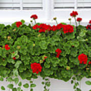Geraniums On Window Poster by Elena Elisseeva