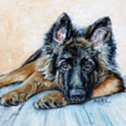 German Shepherd Poster by Enzie Shahmiri