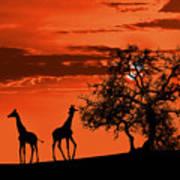 Giraffes At Sunset Poster by Jaroslaw Grudzinski