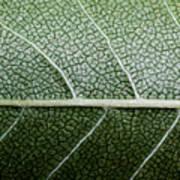 Green Leaf Geometry Poster by Ryan Kelly
