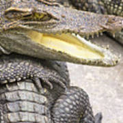 Group Of Crocodiles Poster by Jorgo Photography - Wall Art Gallery