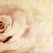 Grungy Rose Background Poster by Anna Omelchenko
