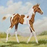 Half Arabian Pinto Filly Poster by Dorothy Coatsworth