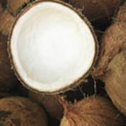 Half Coconut Poster by Brandon Tabiolo - Printscapes