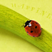 Happiness Poster by Angela Doelling AD DESIGN Photo and PhotoArt