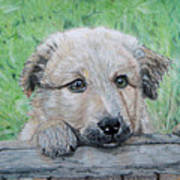 Hello Puppy Poster by Yvonne Johnstone