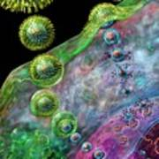 Herpes Virus Replication Poster by Russell Kightley
