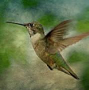 Hummingbird In Flight II Poster by Sandy Keeton