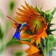 Hummingbird On Sunflower Poster by John  Kolenberg