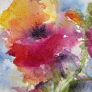 Iceland Poppy Poster by Anne Duke