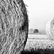 In The Hay -black And White Poster by Dana Walton