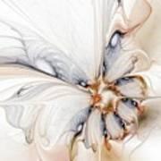 Iris Poster by Amanda Moore