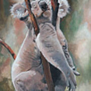 Its About Trust - Koala Bear Poster by Suzanne Schaefer