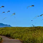 Kites Poster by Robert Bales