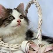 Kitten In Basket Poster by Jai Johnson