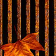 Leaf In Drain Poster by Carlos Caetano