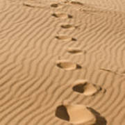 Leave Only Footprints Poster by Heather Applegate
