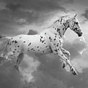 Leopard Appaloosa Cloud Runner Poster by Renee Forth-Fukumoto