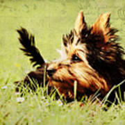 Little Dog Poster by Angela Doelling AD DESIGN Photo and PhotoArt
