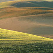 Lone Tree In The Palouse  Poster by Sandra Bronstein