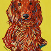 Long Haired Dachshund Poster by Nadi Spencer