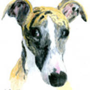 Love That Whippet Poster by Ann Radley