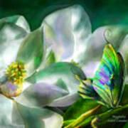 Magnolia Poster by Carol Cavalaris