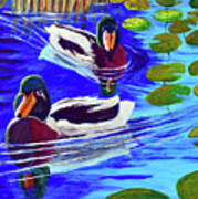 Mallards In The Pads Poster by Bob Crawford