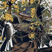 Mocking Birds And Rattlesnake Poster by John James Audubon