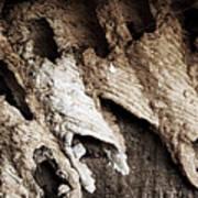 Mud Dauber Poster by Pete Hellmann
