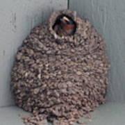 Mud Nest  Poster by Pamela Walrath