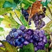 Napa Harvest Poster by Lance Gebhardt