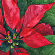 Navidad Poster by Casey Rasmussen White
