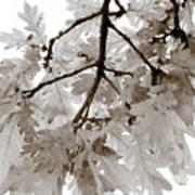 Oak Leaves Poster by Frank Tschakert