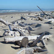 Ocean Coastal Art Prints Driftwood Beach Poster by Baslee Troutman