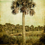 Old Florida Palm Poster by Rich Leighton