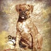Old Time Boxer Portrait Poster by Angie Tirado-McKenzie