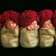 Olivia, Alice, Hugo, Imogin-rose & Mya As Roses Poster by Anne Geddes