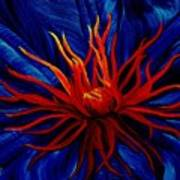 Orange Tango Poster by Julie Pflanzer