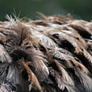 Ostrich Feathers Poster by Teresa Blanton