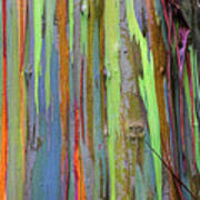 Peeling Bark- St Lucia. Poster by Chester Williams