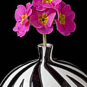 Pink English Primrose Poster by Garry Gay